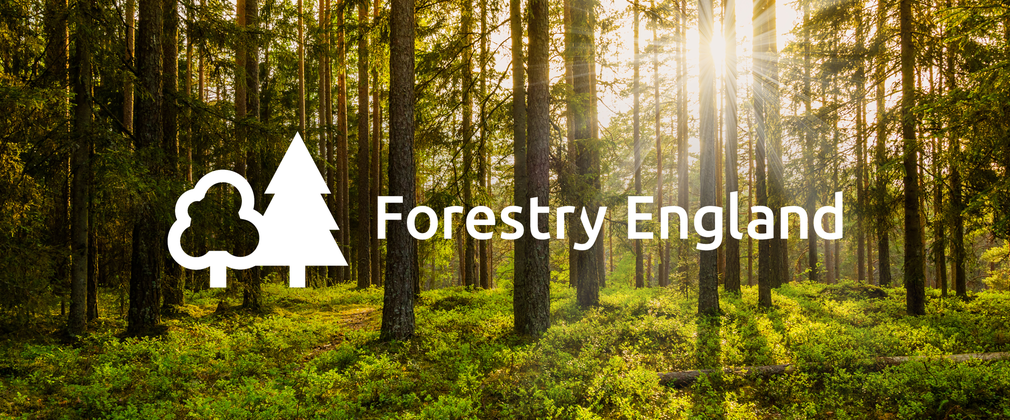 Forestry England Survey